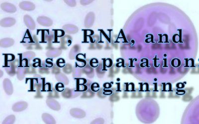 ATP, RNA, and Phase Separation: The Beginning